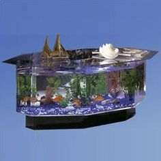 Featuring a simple yet elegant design, this Coffee Table Aquarium Tank can add oodles of charm to your living room. This octagon aquarium tank is made using tempered glass, which makes it sturdy and d Table Aquarium, 75 Gallon Aquarium Stand, Aquarium Ideas, Aquariums For Sale, Tanked Aquariums, Fish Aquariums, Fish Tank Coffee Table, Coffee Tables, Claire Coffee