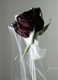 """""""His last demising kiss from his blood red rose…"""" 'Singular Touch' Book One, 'The Platinum Room' J. Tumblr Wallpaper, Rose Wallpaper, Photo Wallpaper, Aesthetic Roses, Red Aesthetic, Aesthetic Pictures, Aesthetic Iphone Wallpaper, Aesthetic Wallpapers, Rose Tumblr"""