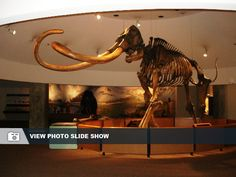 La Brea Tar Pits museum in Los Angeles is free Tuesday