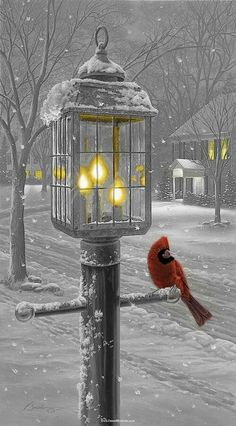 Red Cardinal Perched on Lantern on Snowy Night : [ Winter Snow Birds ] Winter Szenen, I Love Winter, Winter Magic, Winter Time, Winter Light, First Day Of Winter, Christmas Scenes, Christmas Art, Winter Christmas