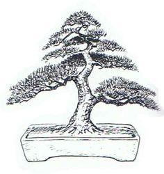 Image from http://bespokebonsai.com/style_informal_upright.jpg.