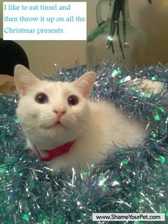 Cat Shaming - I like to eat tinsel and then throw it up on all the Christmas presents.