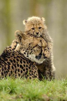 ˚Just a baby Cheetah