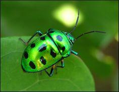 Unknown insect.  Photograph taken by Lakshmi Prabhala