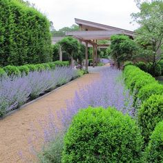 garden shrubs for colour Sage Garden, Lavender Garden, Garden Cottage, Garden Shrubs, Landscaping Plants, Front Porch Landscape, Landscape Design, Garden Design, Landscape Architecture