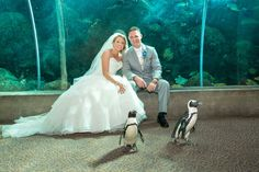 Penguin Wedding - Downtown Tampa Florida Aquarium Wedding - Peacock Blue & Green Tropical Wedding - Captured Images by Augie