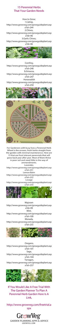 How to create a herb garden that will come back year after year with minimal maintenance, featuring 15 enduring favourites that are easy to grow and thrive in poor soil.