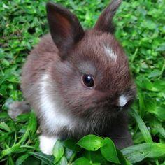 Baby bunny in the garden.