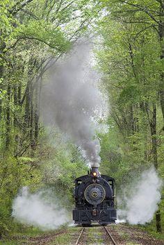 Train goes thru a tree tunnel