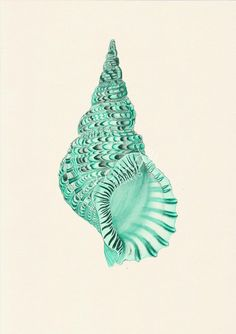 Sea shell print in seafoam - sea life print- seashells wall art home decor print coastal home decoration Arte Coral, Coral Art, Seafoam Color, Coastal Homes, Coastal Cottage, Coastal Living, Antique Illustration, A Level Art, Paper Frames