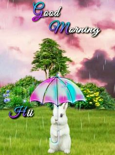 Sweet Good Morning Images, Good Morning Monday Images, Good Morning Friends Images, Good Morning Beautiful Pictures, Good Morning Images Flowers, Morning Pictures, Beautiful Morning, Beautiful Gif, Beautiful Flowers