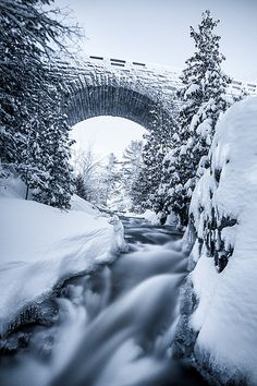 Duck Brook Cyanopowder - Acadia National Park, Maine...taking a drive today with Cecilia & Grayson, should be beautiful.