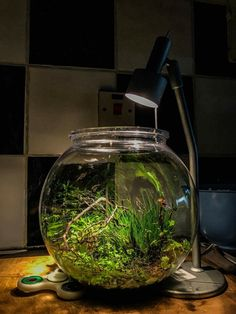 Wabikusa by Cosmin Bruma astept sa il inscrii la concurs EAPLC 2017 Aquarium Garden, Planted Aquarium, Aquarium Fish, Fish Tank Terrarium, Aquarium Terrarium, Plants In Glass Bowl, Water Plants, Indoor Water Garden, Indoor Plants