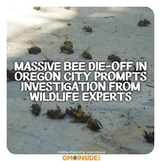 Massive Bee Die-Off In Oregon City Prompts Investigation From Wildlife Experts. More Here: http://www.cbsnews.com/8301-201_162-57590260/massive-bee-die-off-in-oregon-city-prompts-investigation-from-wildlife-experts/