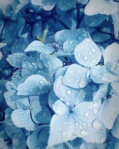 Light Blue Aesthetic, Blue Aesthetic Pastel, Rainbow Aesthetic, Aesthetic Colors, Aesthetic Vintage, Blue Wallpaper Iphone, Blue Wallpapers, Blue Backgrounds, Photo Bleu