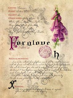 Grimoire, Spell, Herbs and Book of Shadows Pages, Practical Magic; The Cackling Cauldron ~ Book of Shadows: Spell set 3 - plants - Vintage Diy, Images Vintage, Wiccan, Magick, Witchcraft, Collages D'images, Imprimibles Halloween, Witch Herbs, Herbal Magic