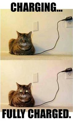 Lol Could not stop laughing is part of Cat quotes funny - More memes, funny videos and pics on Funny Animal Jokes, Funny Cat Memes, Really Funny Memes, Funny Animal Videos, Cute Funny Animals, Funny Shit, Funny Humor, Funny Videos, Animal Funnies