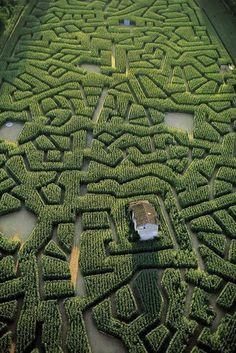 coisasdetere: France. Labyrinthe de maïs de Cordes-sur-Ciel, Tarn.