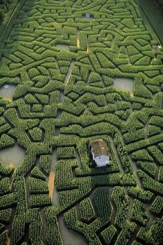 France. Labyrinthe de maïs de Cordes-sur-Ciel, Tarn.
