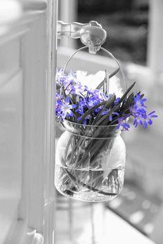 Color splash / purple / flowers
