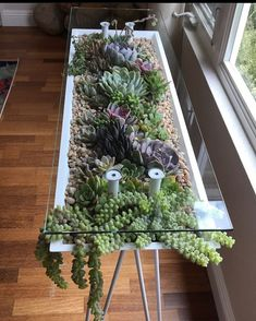 Gorgeous Succulent Plants Ideas For Indoor And Outdoor Full Of Aesthetics - - Beautiful Succulents indoor ideas, succulents outdoor decor , succulent diy garden ideas, succulent - Rare Succulents, Planting Succulents, Succulent Plants, Vertical Succulent Gardens, Indoor Succulents, Succulent Terrarium, House Plants Decor, Plant Decor, Suculentas Interior
