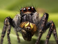 паук макро фото