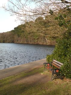Bench overlooking Blackroot Pool, Sutton park, Sutton Coldfield, England our non swimming dog Duke hurled himself in here regularly and had to be saved!!