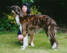 Absolutely gorgeous dog. I'd love to own a zoi in this color someday.