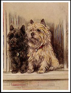 Amazing Cairn Terrier Ball Adorable Dog - 2ca8faaeba790c25f66c94bac328fdac--little-dogs-big-dogs  Photograph_389057  .jpg