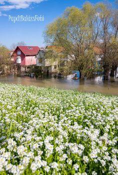 Szeged - Tisza - Víz 2018 tavasz Papdi Balázs fotója