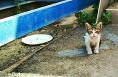 A street kitten