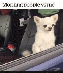 Wie normale Menschen aufstehen / Wie ich aufstehe. | Lustige Bilder, Sprüche, Witze, echt lustig