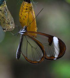 La farfalla con le ali di vetro