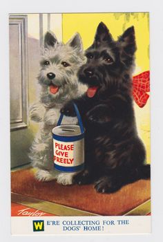 Vintage 1950s terrier dogs art illustrated postcard by GalabeerandtheDog, on Etsy