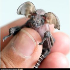 I have no idea what this is...but it's cute! Like a little dragon!