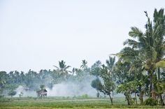 Palm oil is farmed 2 ways: One produces a lot of smoke and distress, and one keeps all life in mind.
