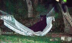 A black bear relaxing in a hammock in Florida — and more top photos of 2014: http://cbsn.ws/1zrJ6c0