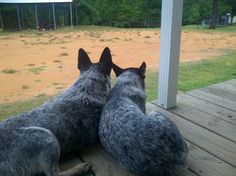 awww....This reminds me of our Petey and Lulu whenever they stay still long enough to enjoy the peace and quite.