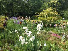Luxury Verschiedene Iris in der Flora botanischer Garten in K ln