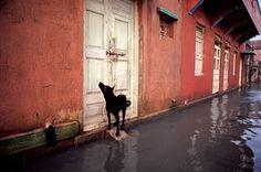 Steve McCurry | INDIA. Gujarat. Porbandar. 1983.