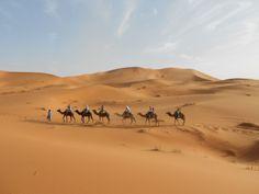 Sahara, Maroc, 2014