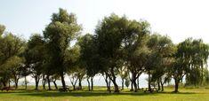Hilia Dedra Magical Landscape #forest #escape #walking #exploring #travel #adventure #trees #green #spring