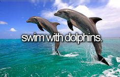 I've always wanted to swim with dolphins. I have no clue why but it seems like it would be amazing and fun!