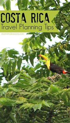 Costa Rica Travel Planning Tips - perfect for those planning their first visit to Costa Rica!
