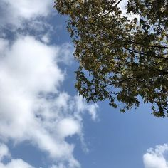 |||空晴れ秋 素材として使用可||| October 13 2019 at 04:17PM ||| nagamel.tumblr.com Tumblr, Clouds, Outdoor, Outdoors, Outdoor Games, The Great Outdoors, Tumbler, Cloud