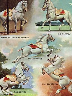 Vintage Equestrian: Dancing Stallions - The White Stallion of Lipizza by Marguerite Henry, illustrated by Wesley Dennis. I remember seeing Lipizzaners performing live-- it was amazing! Pretty Horses, Beautiful Horses, Spanish Riding School, Horse Illustration, Horse Books, Horse Artwork, Vintage Horse, Equestrian Outfits, White Horses