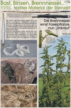 Textiles Material der Steinzeit (from the stone age) Belleza Diy, Primitive Technology, Plant Fibres, Weaving Textiles, Stone Age, Prehistory, Outdoor Survival, Survival Skills, Bushcraft