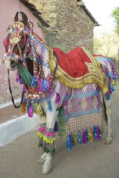 baarat horse