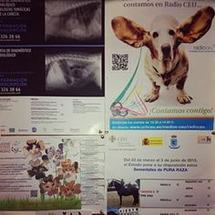 You can find the most interesting notes attached to our noticeboards!  #UCHCEU #University #Veterinary #Board #News #Photos and #More