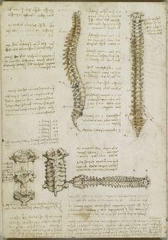 spina dorsale, Leonardo